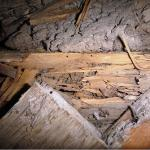 Bois dégradé par des termites